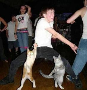funny-cats-dance